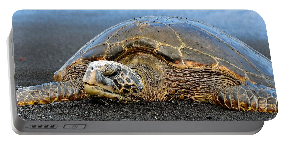 David Lawson Photography Portable Battery Charger featuring the photograph Do Not Disturb by David Lawson