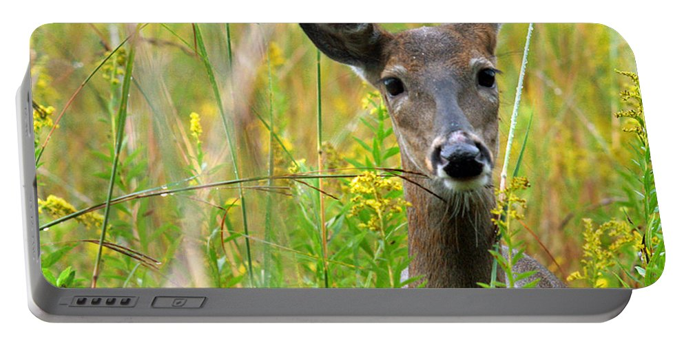 Deer Portable Battery Charger featuring the photograph Doe In Morning Dew by Crystal Heitzman Renskers