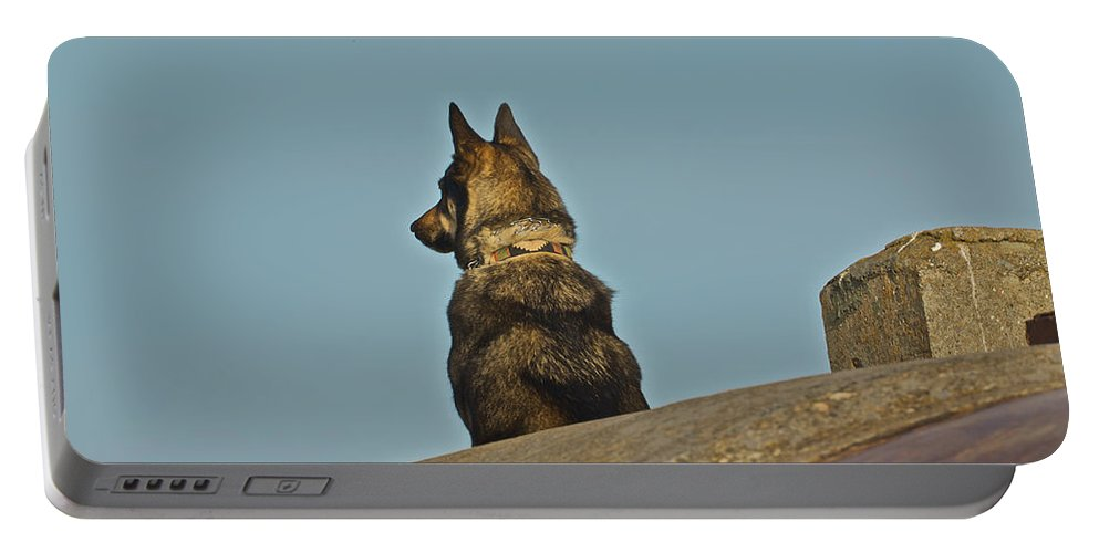 Point Bonita Portable Battery Charger featuring the photograph Dog At Point Bonita by SC Heffner
