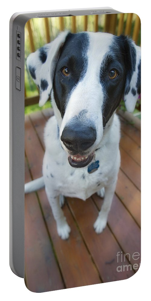 Animal Portable Battery Charger featuring the photograph Dog On A Wooden Deck by Wave Royalty Free