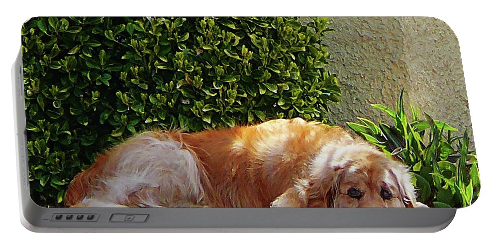 Dog Portable Battery Charger featuring the photograph Dog Relaxing by Susan Savad