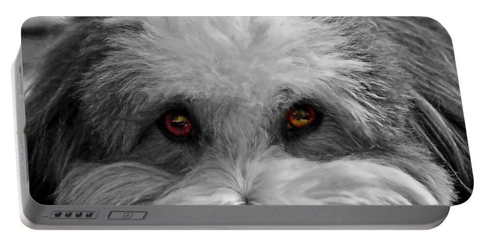 Dog Portable Battery Charger featuring the photograph Coton Eyes by Keith Armstrong