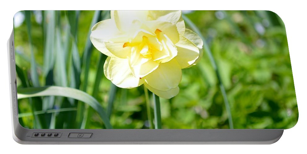 Daffodil Portable Battery Charger featuring the photograph Double Charm by Sonali Gangane