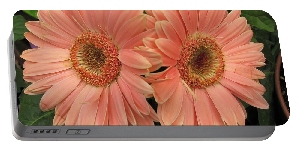 Nature Portable Battery Charger featuring the photograph Double Delight - Coral Gerbera Daisies by Dora Sofia Caputo Photographic Design and Fine Art