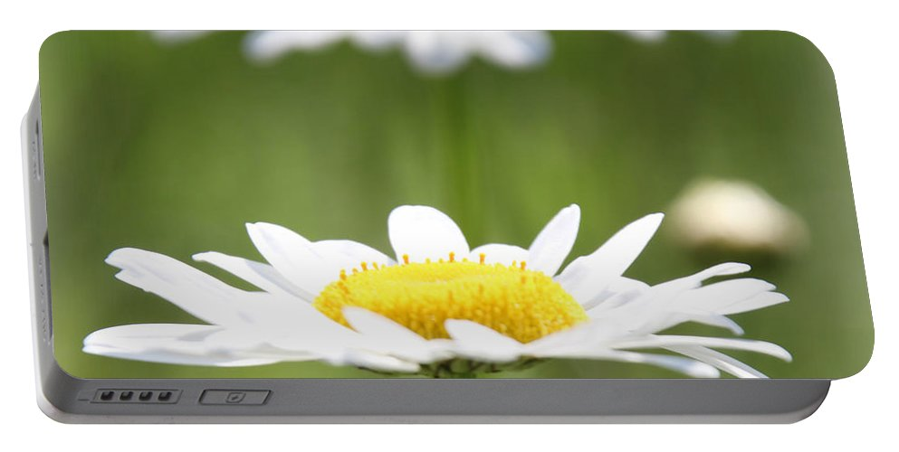Daisy Portable Battery Charger featuring the photograph Double Take Color by Amy Steeples