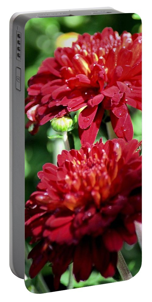 Doubled Red Mums Portable Battery Charger featuring the photograph Doubled Red Mums by Maria Urso
