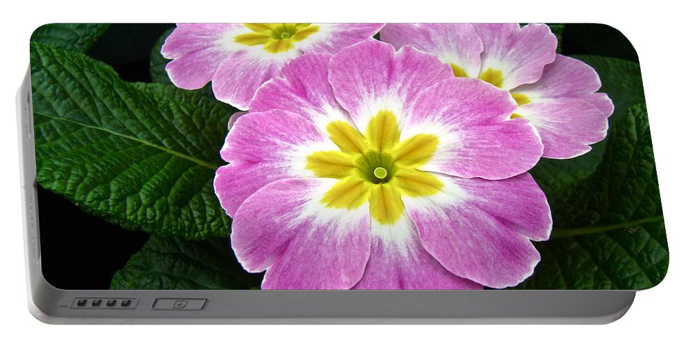 Primrose Portable Battery Charger featuring the photograph Down On Primrose Lane by Mother Nature