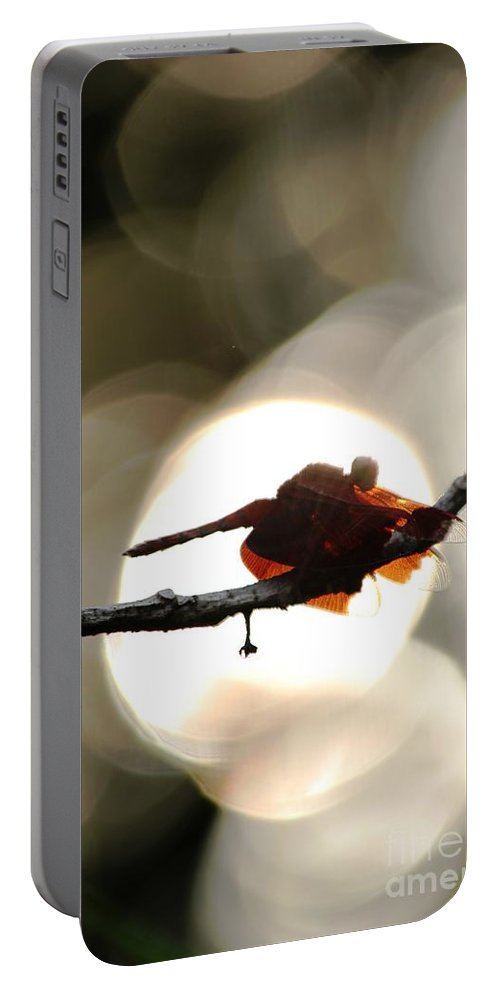Dragonfly Portable Battery Charger featuring the photograph Dragonfly Bathing In Sunset by Nola Lee Kelsey
