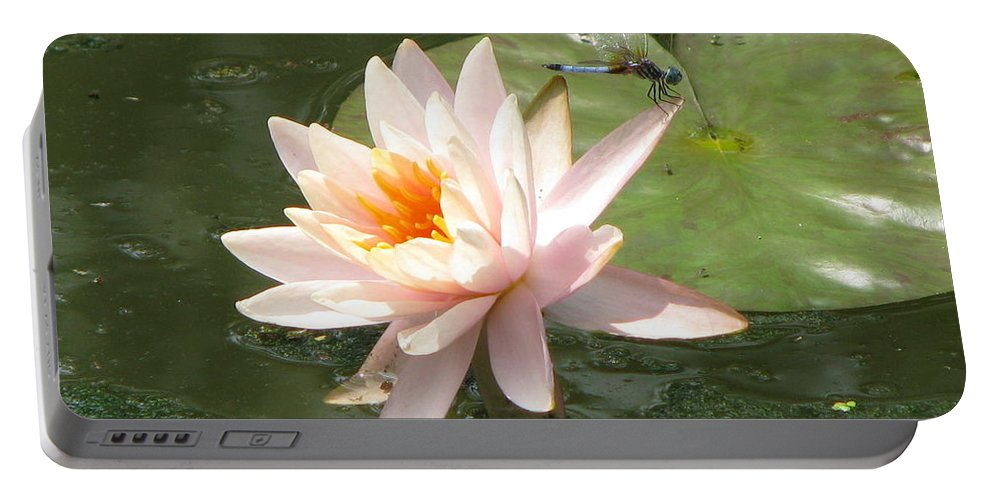 Dragon Fly Portable Battery Charger featuring the photograph Dragonfly Landing by Amanda Barcon
