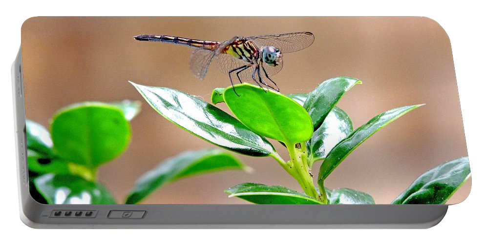 Damselflies Portable Battery Charger featuring the photograph Dragonfly by Marilyn Holkham