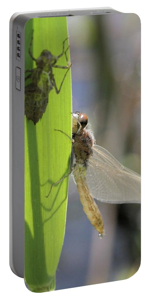 Dragonfly Portable Battery Charger featuring the photograph Dragonfly Metamorphosis - Eighth In Series by Doris Potter