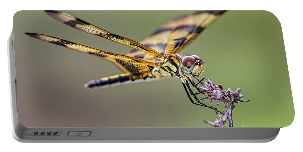 Dragonfly Portable Battery Charger featuring the photograph The Halloween Pennant Dragonfly by Olga Hamilton
