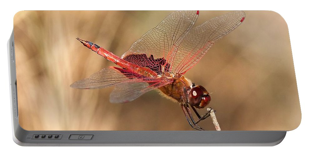 Dragonfly Portable Battery Charger featuring the photograph Dragonfly by Stuart Litoff