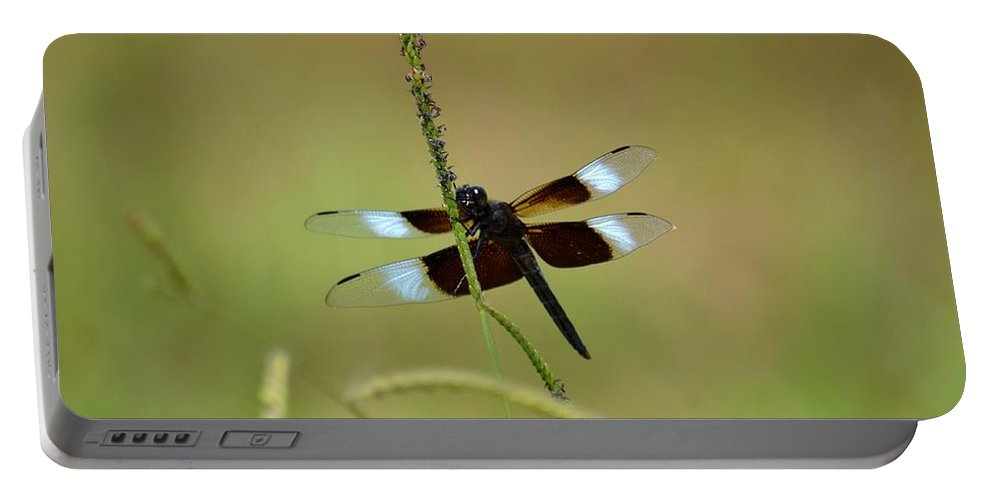 Dreaming Dragonfly Portable Battery Charger featuring the photograph Dreaming Dragonfly by Maria Urso