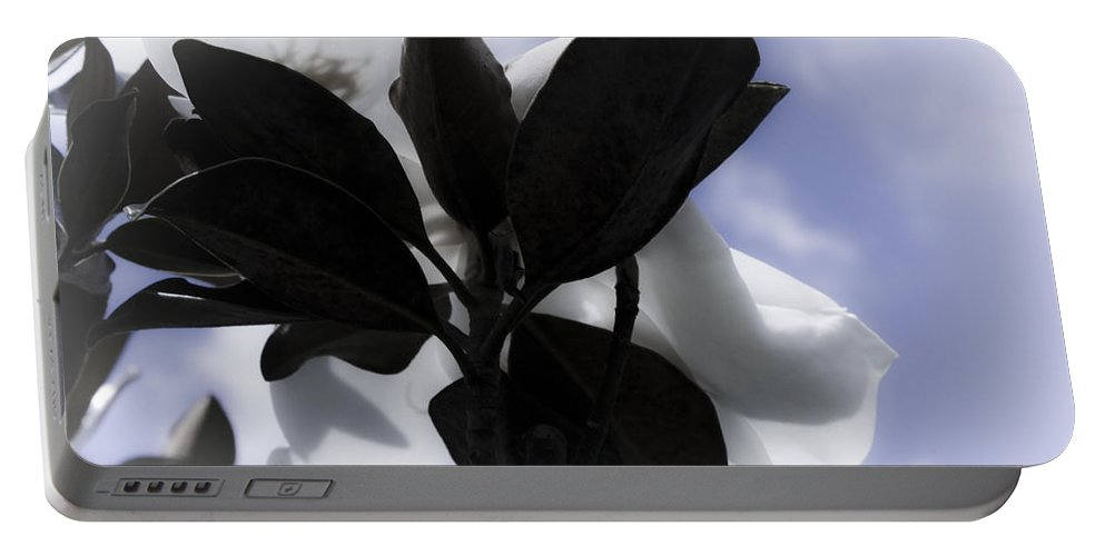 Magnolia Portable Battery Charger featuring the photograph Dreams In The Sky by Janie Johnson