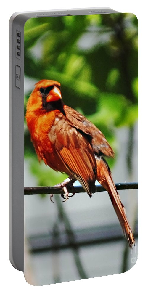 Cardinal Portable Battery Charger featuring the photograph Dressed In Red by Lizi Beard-Ward