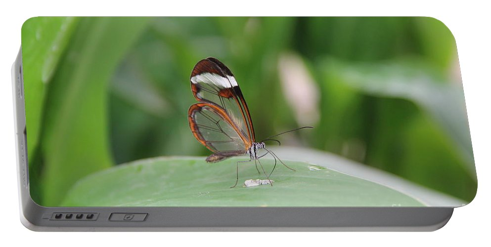 Nature Portable Battery Charger featuring the photograph Drinking Water by Jackie Mestrom