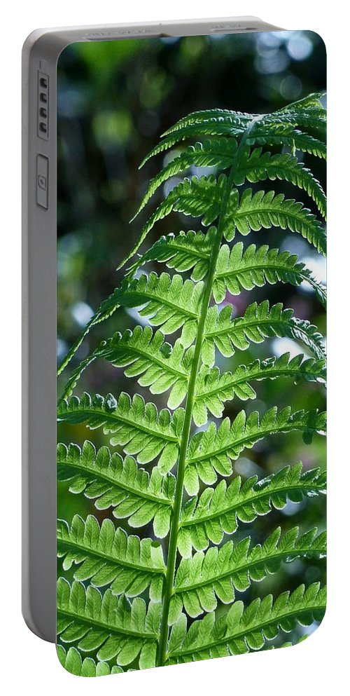 Fern Portable Battery Charger featuring the photograph Druid by Connie Handscomb