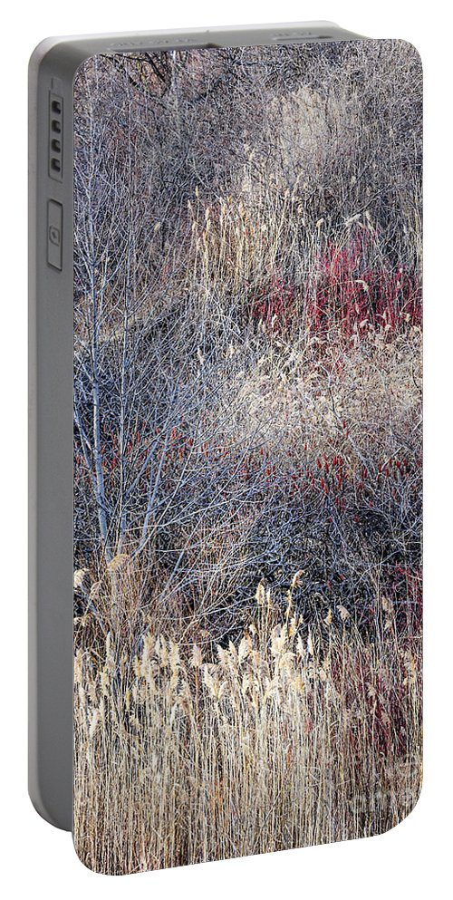 Grasses Portable Battery Charger featuring the photograph Dry Grasses And Bare Trees by Elena Elisseeva
