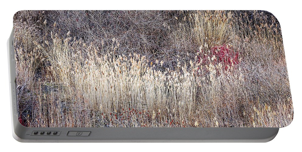 Grasses Portable Battery Charger featuring the photograph Dry Grasses And Bare Trees In Winter Forest by Elena Elisseeva