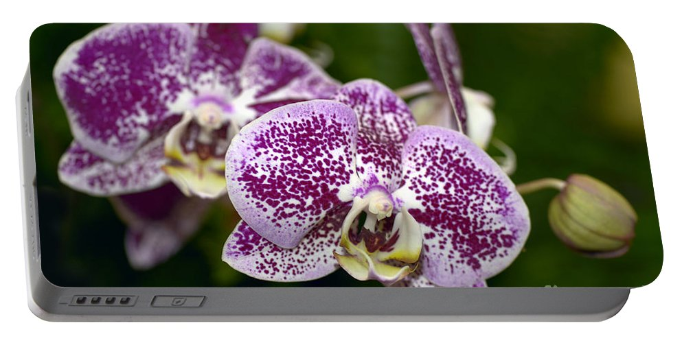Orchid Portable Battery Charger featuring the photograph Dtps. Pullars Pearl 8153 by Terri Winkler