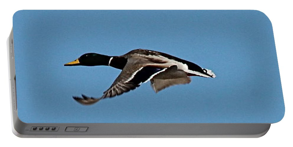 Birds Portable Battery Charger featuring the photograph Duck Flight II by Wayne Williams