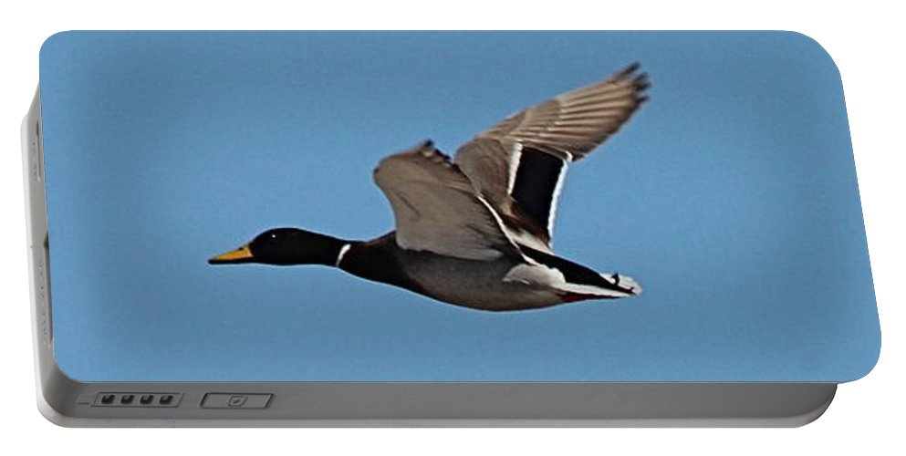 Birds Portable Battery Charger featuring the photograph Duck Flight by Wayne Williams