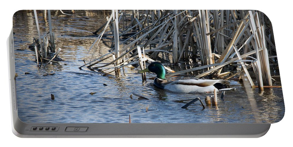 Duck Portable Battery Charger featuring the photograph Duck Paddle by Jayne Gohr