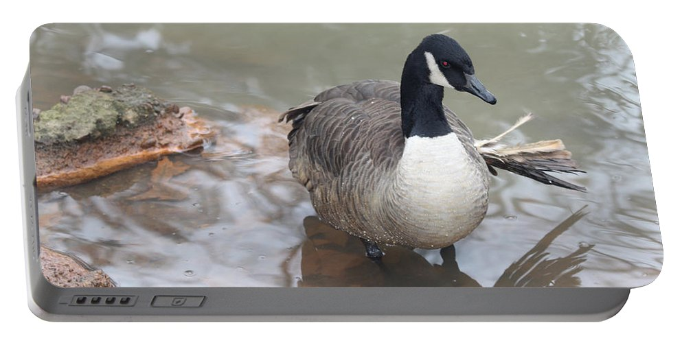 Duck Wading In A Stream Portable Battery Charger featuring the photograph Duck Wading In A Stream by John Telfer