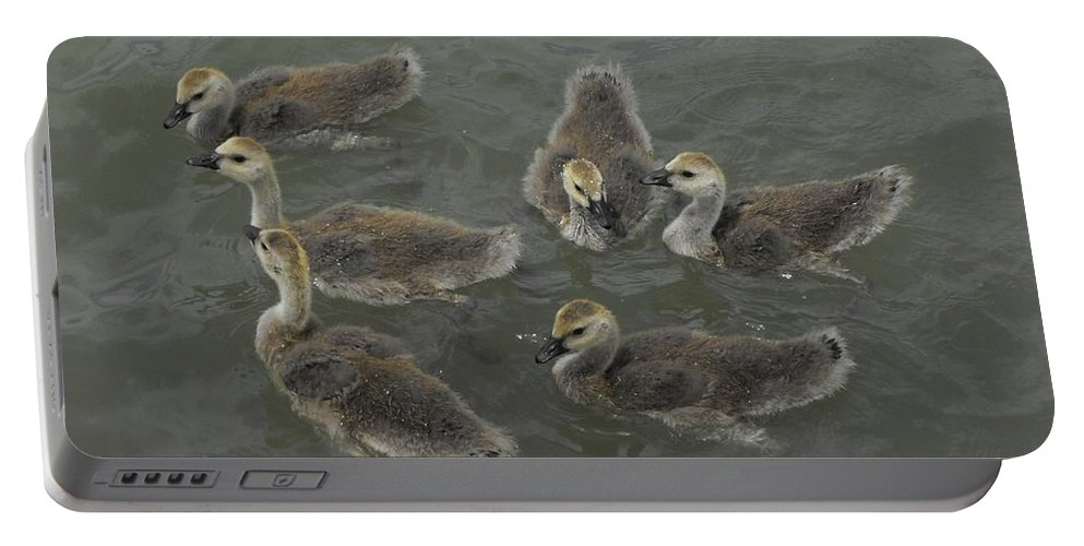 Ducks Portable Battery Charger featuring the photograph Ducklings by Brandi Maher