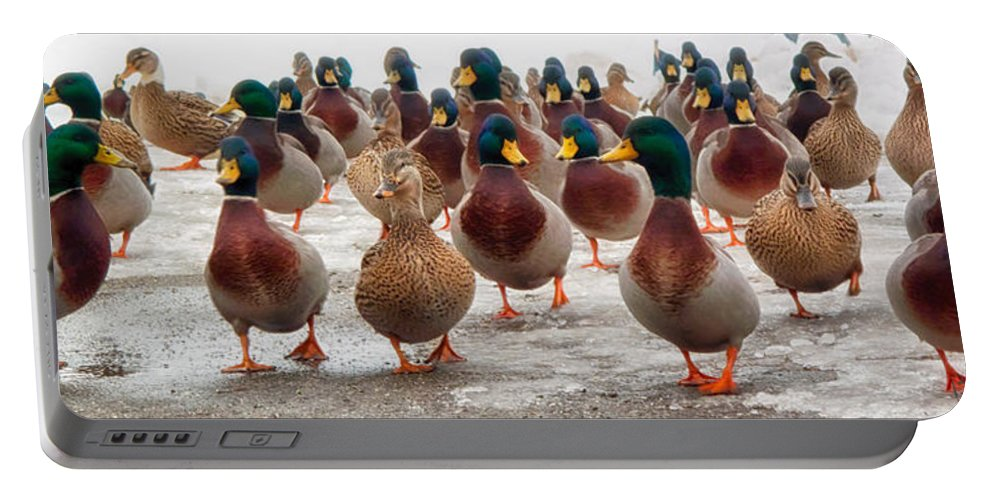 Ducks Portable Battery Charger featuring the photograph DuckOrama by Bob Orsillo