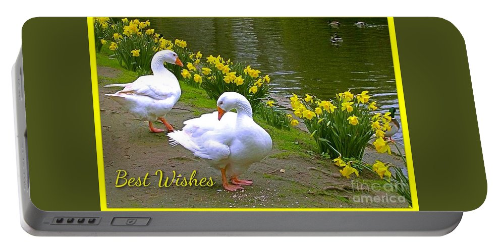 White Ducks Portable Battery Charger featuring the photograph Ducks And Daffodils Greeting by Joan-Violet Stretch