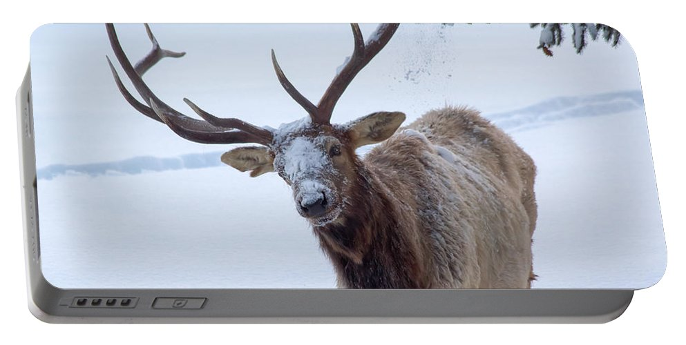 Snow Portable Battery Charger featuring the photograph Dumped On by Shane Bechler