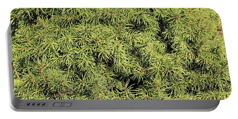 Mini Portable Battery Charger featuring the photograph Dwarf Evergreen by Lee Serenethos