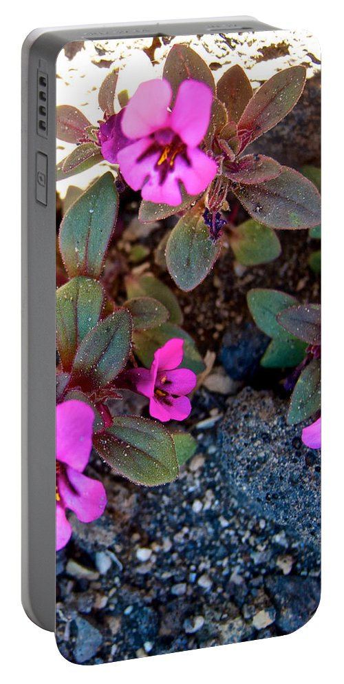 Dwarf Purple Monkeyflower Portable Battery Charger featuring the photograph Dwarf Purple Monkeyflower In Lava Beds Nmon-ca by Ruth Hager