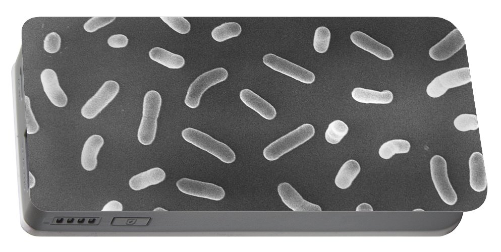 Escherichia Coli Portable Battery Charger featuring the photograph E. Coli Bacteria Sem X17,000 by David M. Phillips