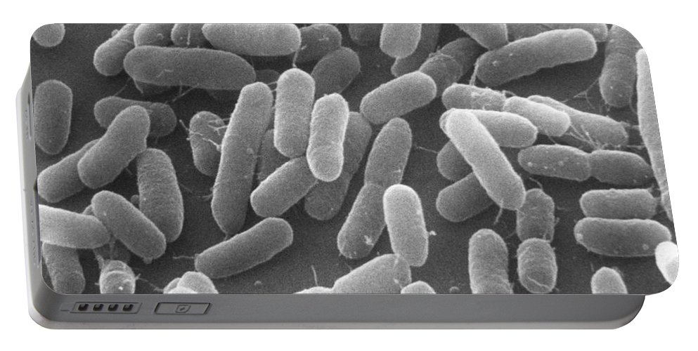 Escherichia Coli Portable Battery Charger featuring the photograph E. Coli Bacteria Sem X25,000 by David M. Phillips