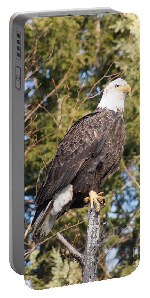 Eagle Portable Battery Charger featuring the photograph Eagle 1979 by Joseph Marquis