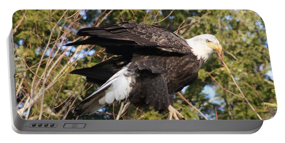Eagle Portable Battery Charger featuring the photograph Eagle 1982 by Joseph Marquis