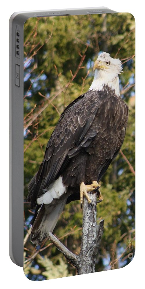 Eagle Portable Battery Charger featuring the photograph Eagle 1985 by Joseph Marquis