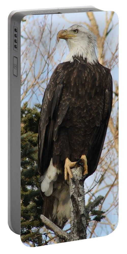 Eagle Portable Battery Charger featuring the photograph Eagle 1991a by Joseph Marquis