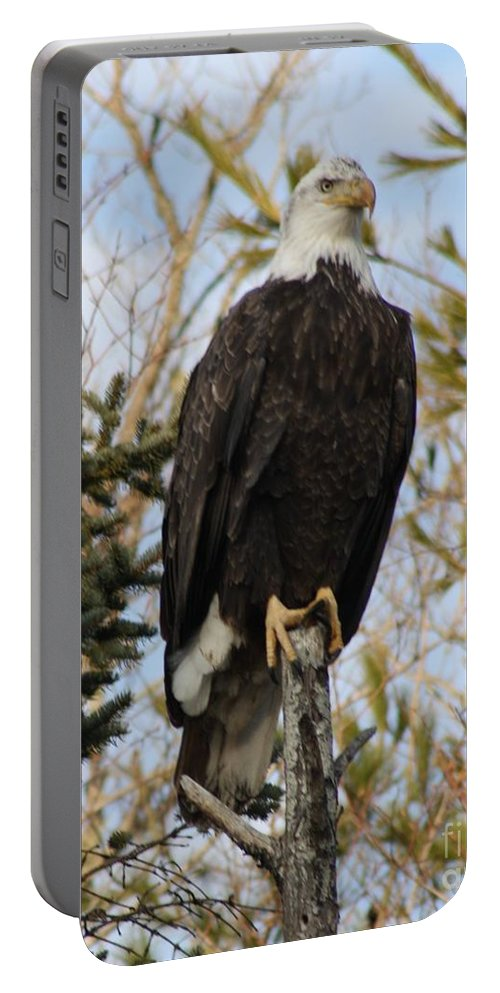 Eagle Portable Battery Charger featuring the photograph Eagle 2 by Joseph Marquis