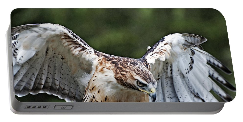 Portable Battery Charger featuring the photograph Eagle Wings by Bill Howard