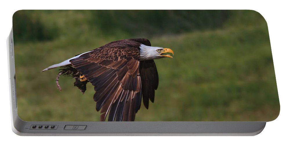 Bald Eagle Portable Battery Charger featuring the photograph Eagle With Prey by Beth Sargent