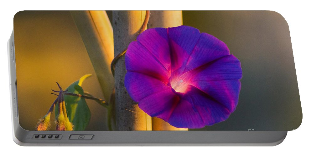 Morning Portable Battery Charger featuring the photograph Early Bloomer by Joe Geraci