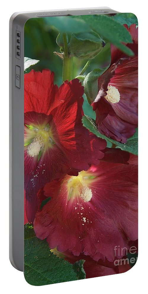 Hollyhock Portable Battery Charger featuring the photograph Early Light by Joseph Yarbrough