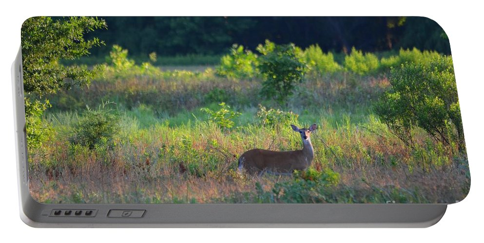 Doe Portable Battery Charger featuring the photograph Early Morning Doe by Deanna Cagle