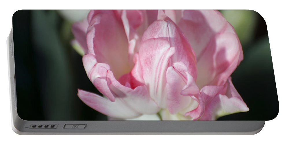 Pink Tulip Portable Battery Charger featuring the photograph Early Spring 4 Of 5 by Terri Winkler