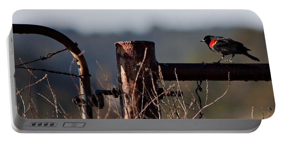 Red-winged Blackbird Portable Battery Charger featuring the photograph Eary Morning Blackbird by Art Block Collections