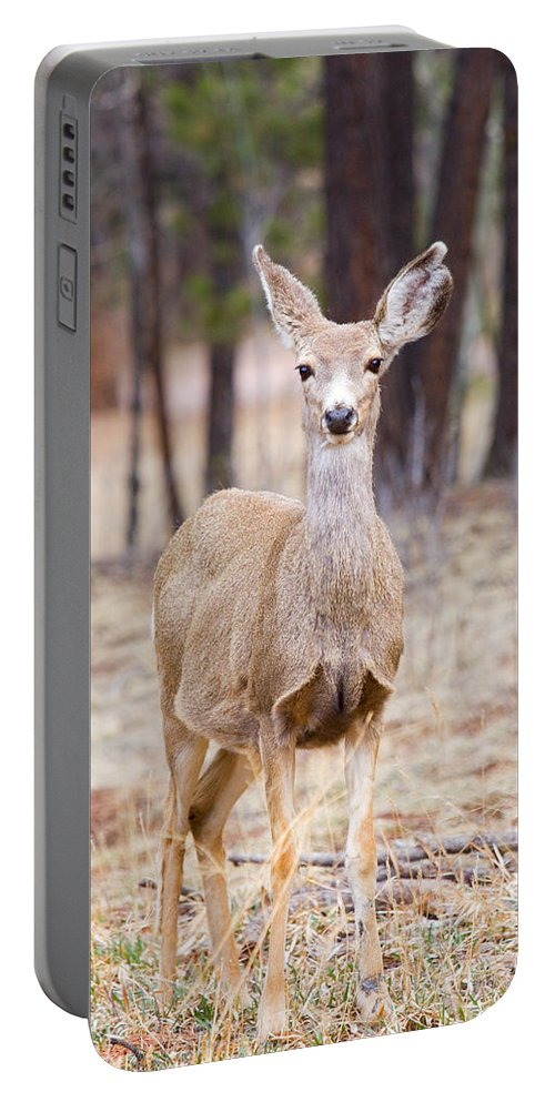 Mule Deer Portable Battery Charger featuring the photograph Easter Does by Steve Krull